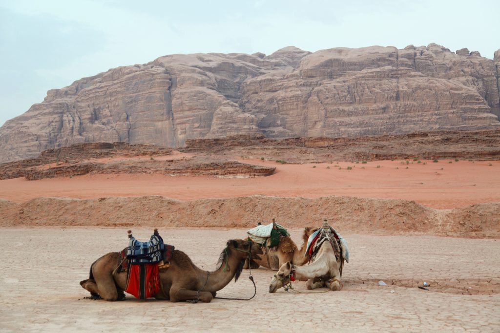Top 8 Things To Do in Jordan
