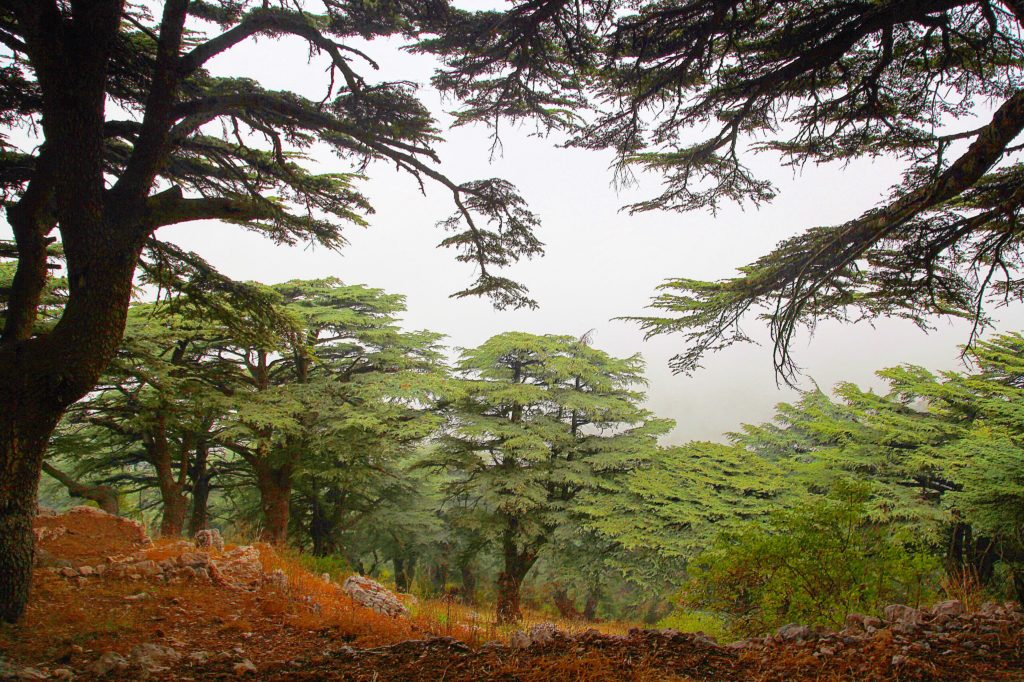 An Insiders Guide to Lebanon
