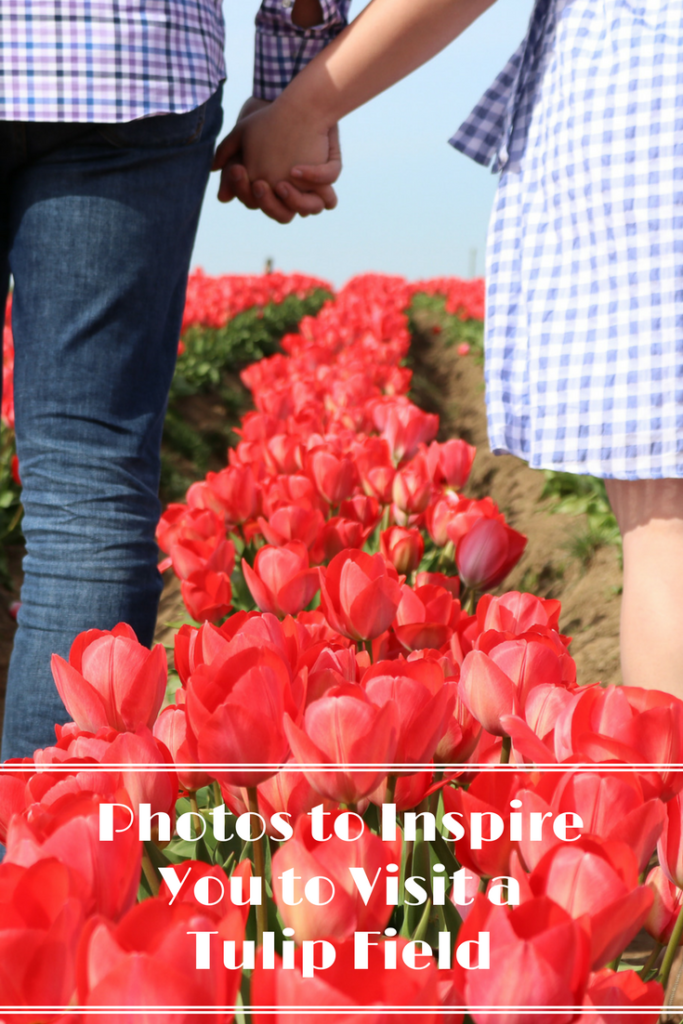 Photos to Inspire You To Visit a Tulip Field