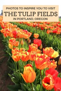 Photos to inspire you to visit tulip fields in Portland, Oregon. Such a pretty spring activity!