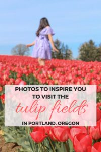 Photos to inspire you to visit the tulip fields at the Wooden Shoe Festival in Portland, Oregon, USA