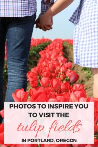 Photos to inspire you to visit the tulip fields at the Wooden Shoe Tulip Festival in Portland, Oregon, USA