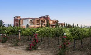Best Wineries in Temecula and Things to do in Temecula