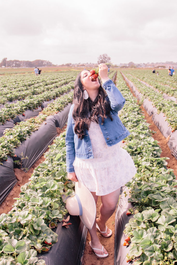 Strawberry picking in Carlsbad